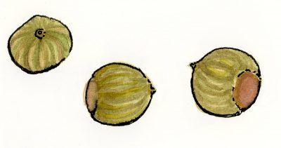 MIT Seeds