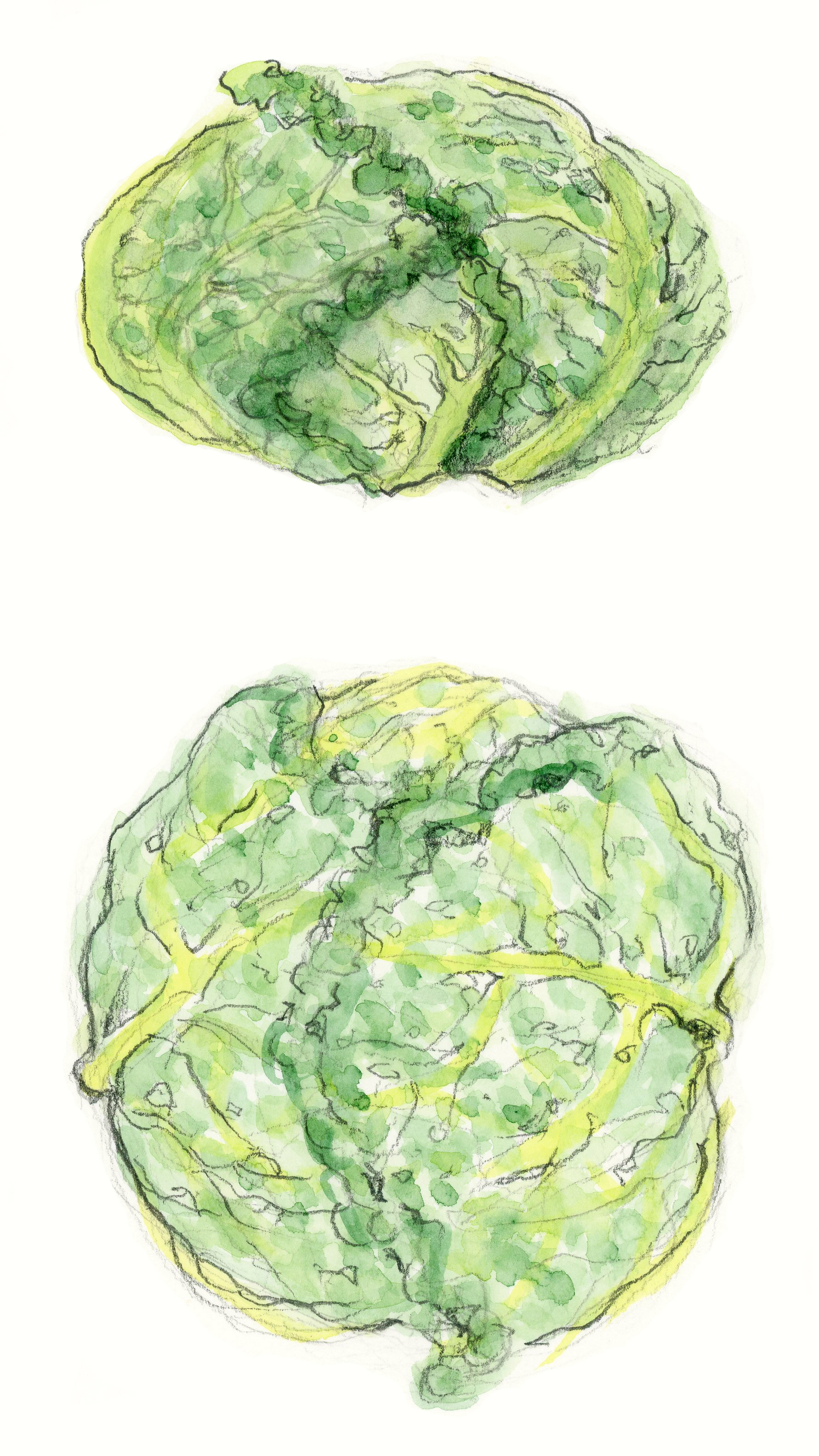 Small Frilly Cabbage